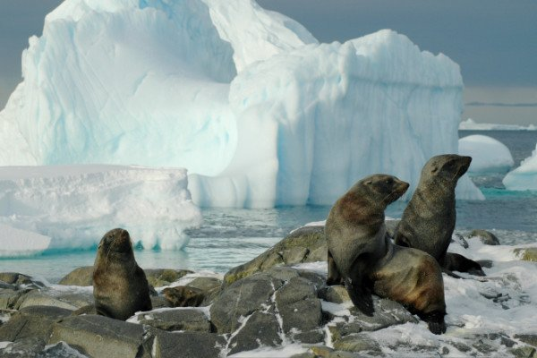 Climate change has had a major impact on the physical environment and the well-being of wildlife in Antarctica - which is one of the fastest warming areas on Earth.